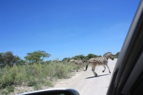 Dans le parc national d'Etosha / In Etosha National Park